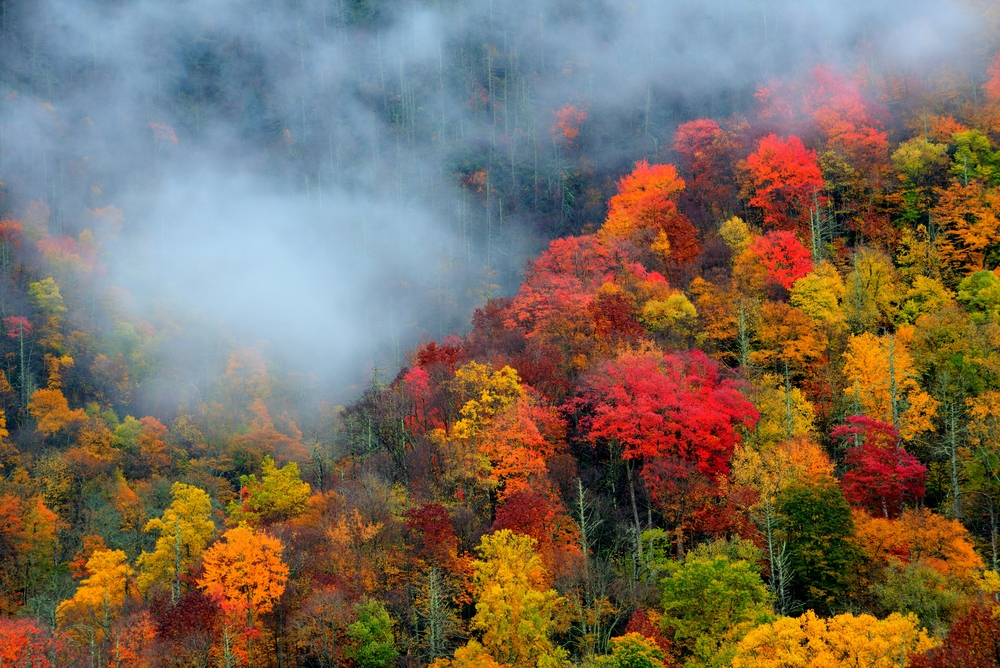 The 4 Best Things to Do in Pigeon Forge in the Fall