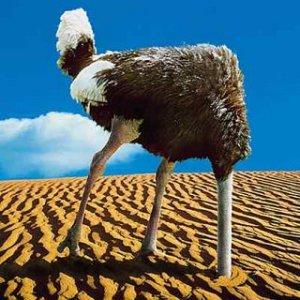 ostrich-757855