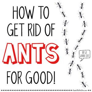 How to Get Rid of Those Ants