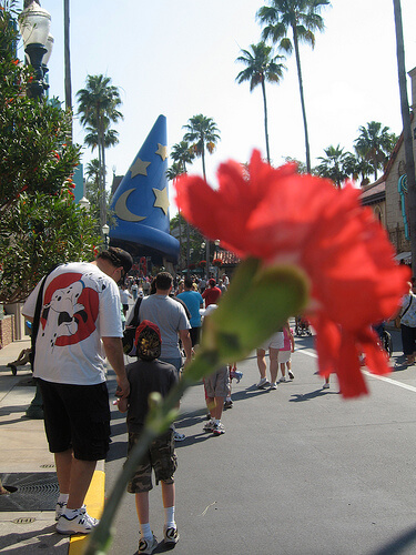 A rose at Disney's Hollywood Studios