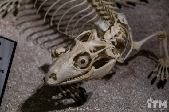 skeletons-animals-unveiled-135