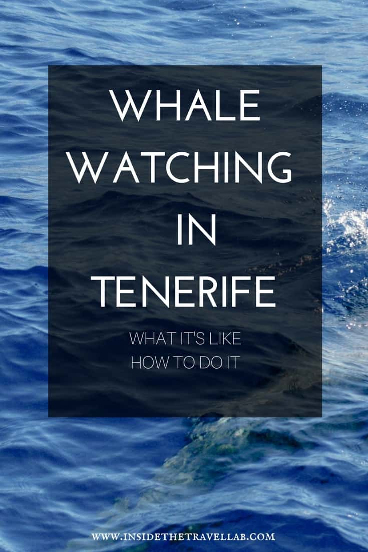 Whale watching in Tenerife with help on how to arrange a trip in Los Gigantes