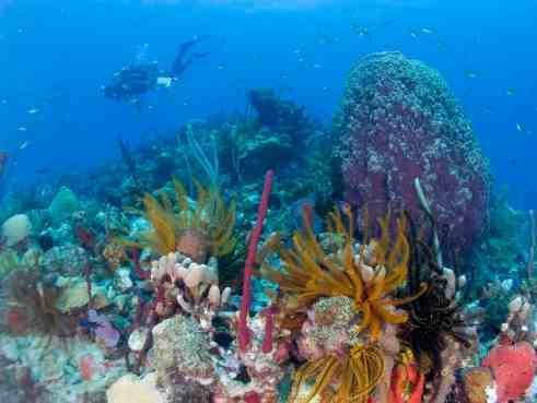 Dominica Top Ten Ethical Travel Destinations 2011