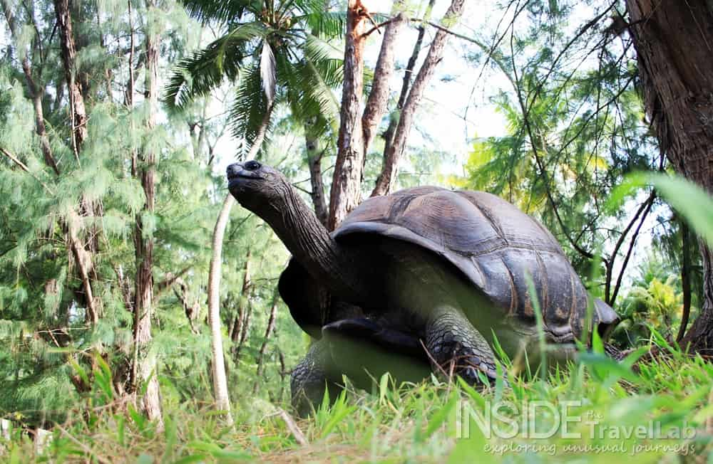 Seychelles Islands - Best Place to Visit in Africa for Volcanic Wildlife