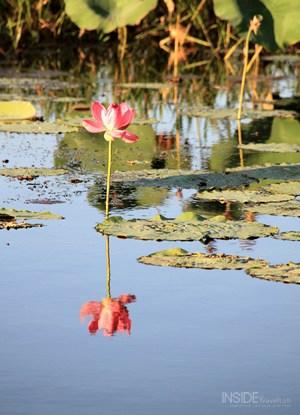 Kakadu Park Lily Meaning