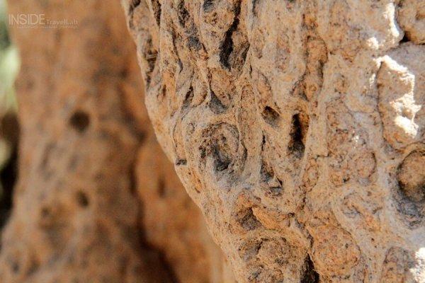 Termite mound close-up
