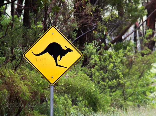 kangaroo crossing