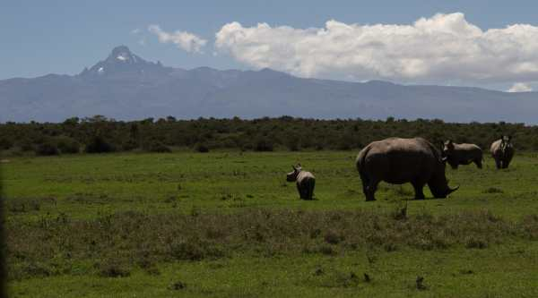 Endangered animals rhinos in front of Mount Kenya via @insidetravellab