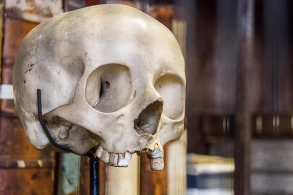 Skull at Marsh's Library via @insidetravellab