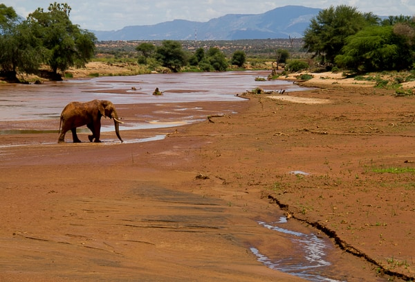 Elephant crossing land in Kenya