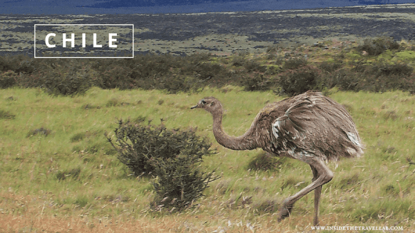 travel to chile WITH @INSIDETRAVELLAB