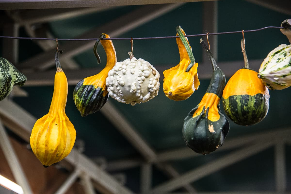 Food in Latvia: hanging pumpkins at the largest market in Europe via @insidetravellab