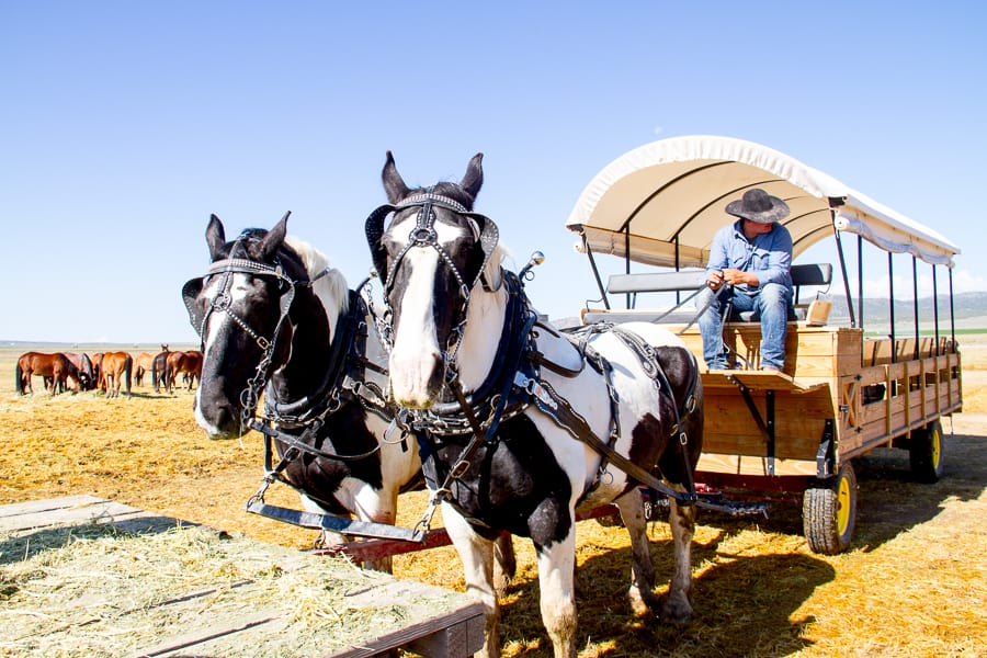 Riding off to find wild horses via @insidetravellab