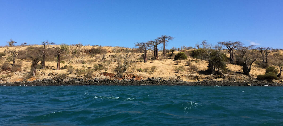 Baobab trees in Madagascar from the boat via @insidetravellab