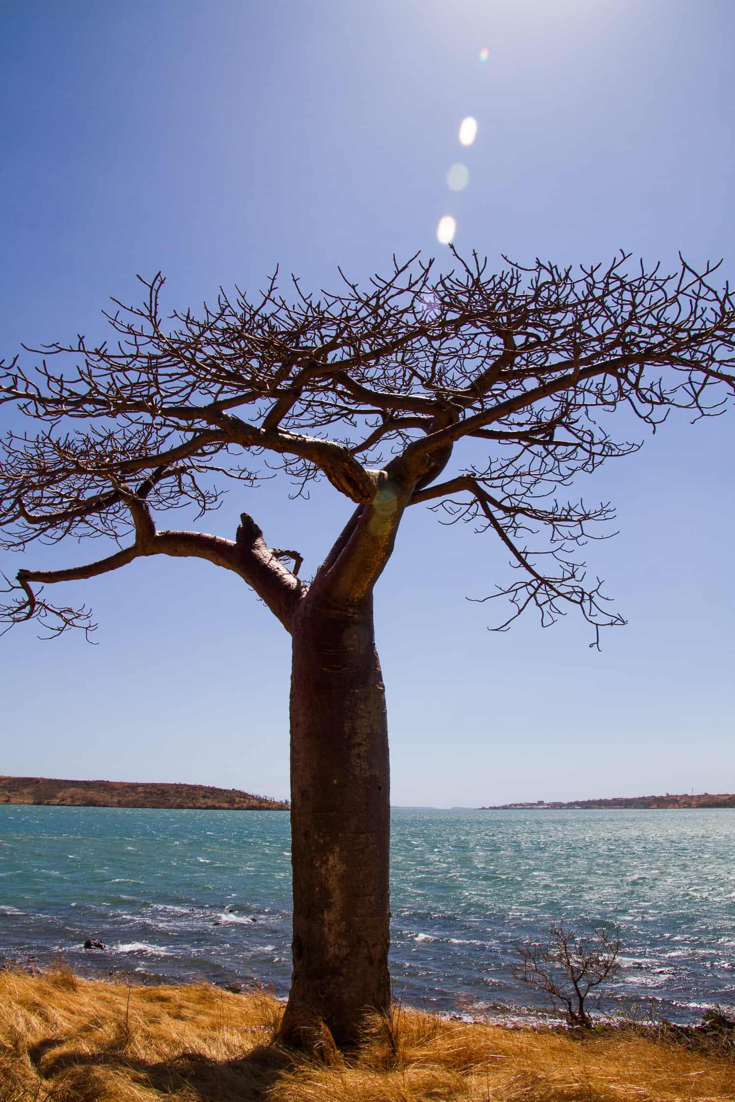 Standing Baobab tree in Madagascar via @insidetravellab