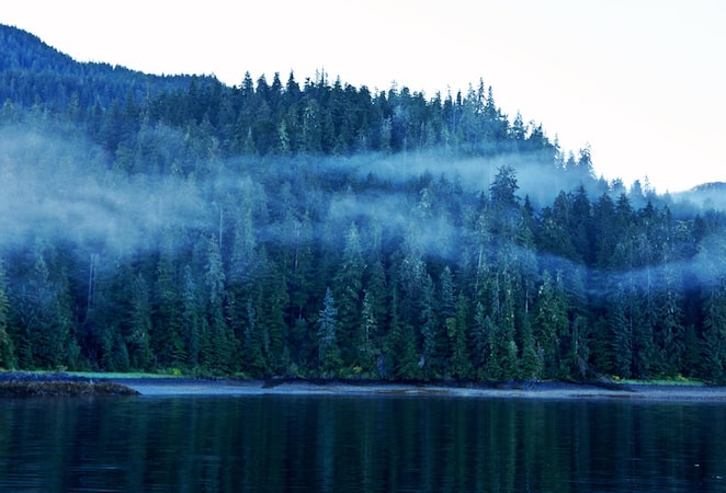 Mists flow through the forests in Alaska via @insidetravellab
