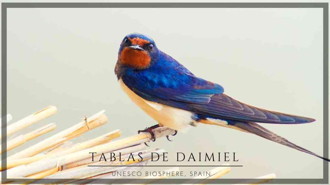 Tablas de daimiel wetlands in Spain La Mancha