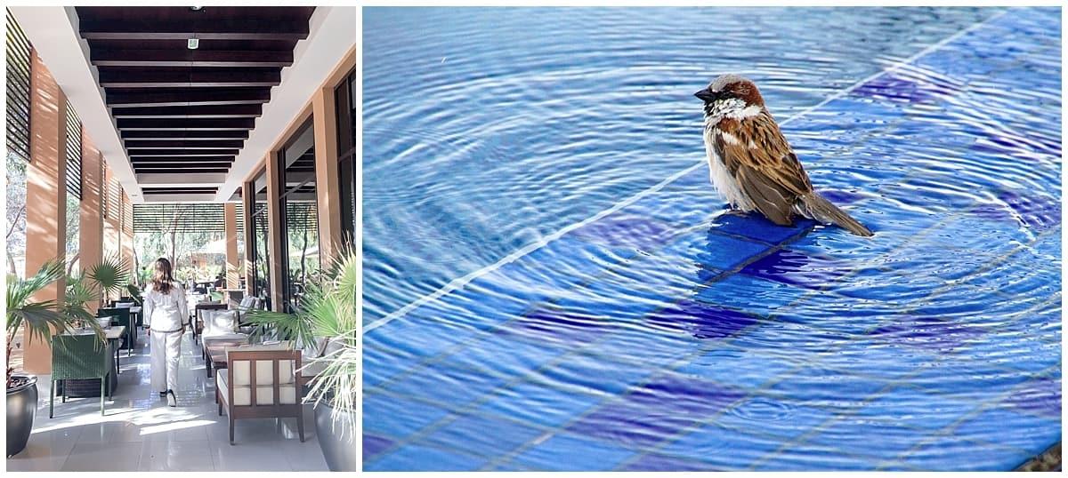 Bird in plunge pool and Abigail King in Kaheela Restaurant