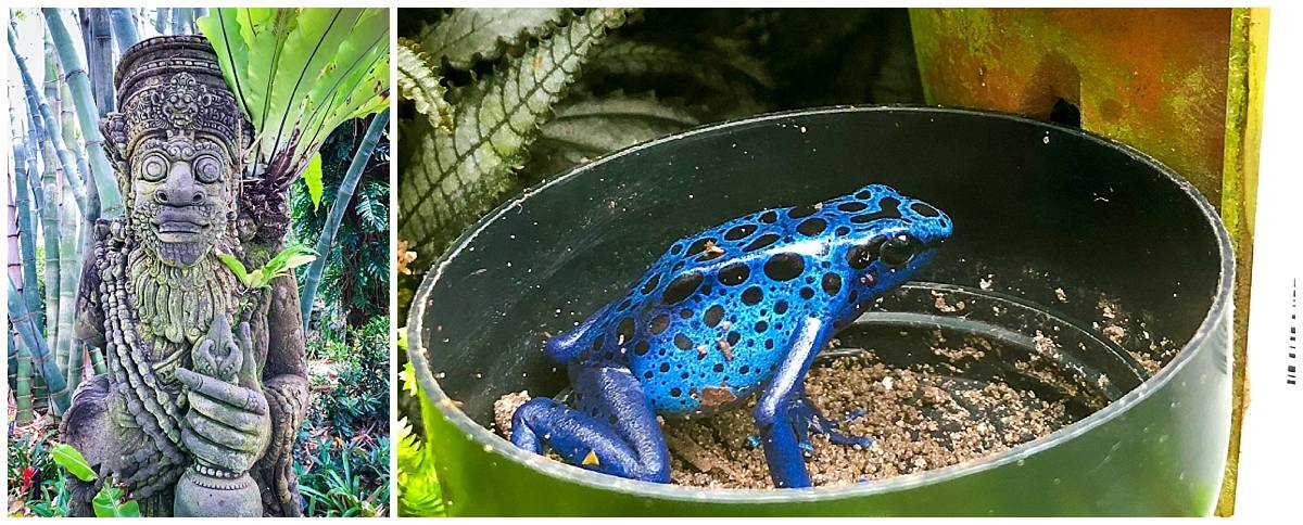 Blue frog at Marie Selby Botanical Gardens in Sarasota Florida