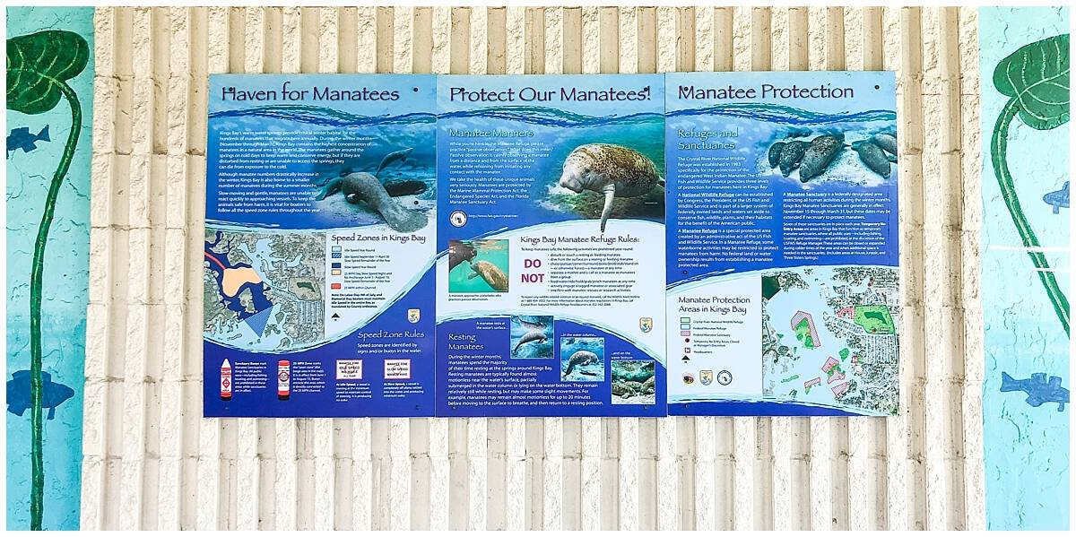 Manatee Conservation Information in Crystal River