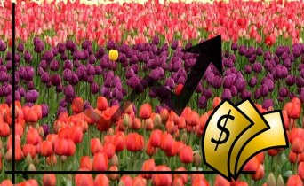 Geschichte der Börse – die Tulpen-Blase (Tulpomanie)