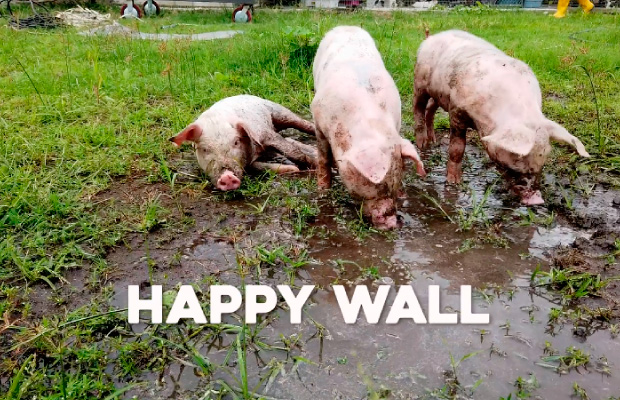 Destacada Happy Wall accion social Tsingtao Laika Grey