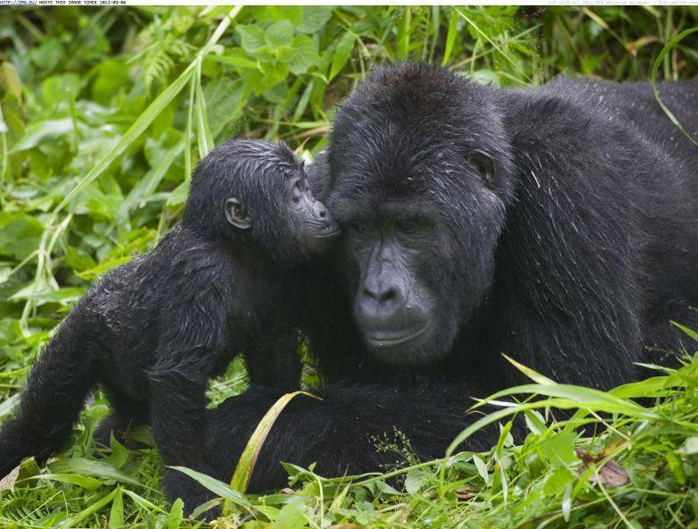 top 10 african safari destinations 2017
