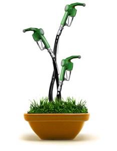 green-energy-fuel-grass-plant-sciam
