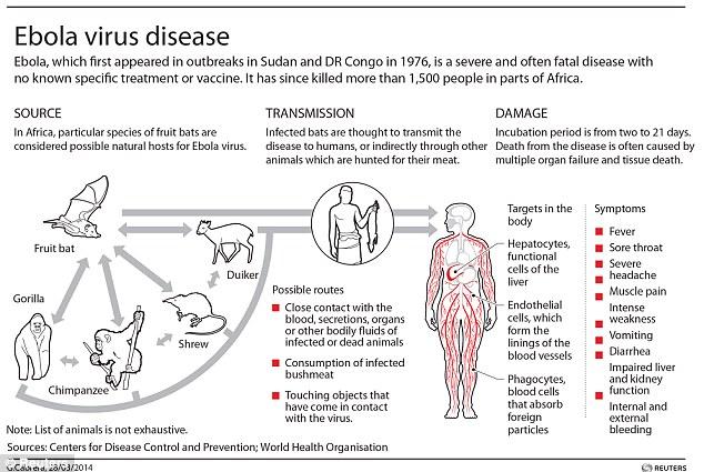 Ebola-Virus-Source