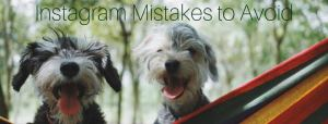Dethrone the Dog Photo | Instagram Mistakes to Avoid