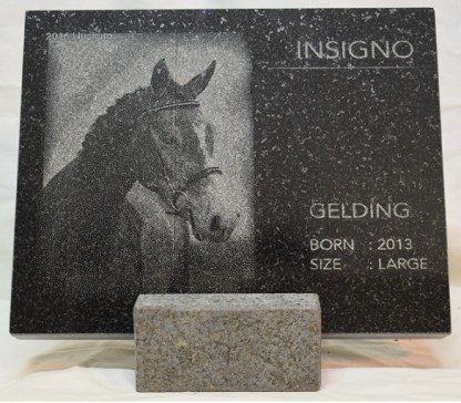 Insigno_Horse_Stand_Front