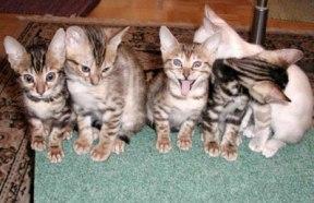 gato_maconheiro