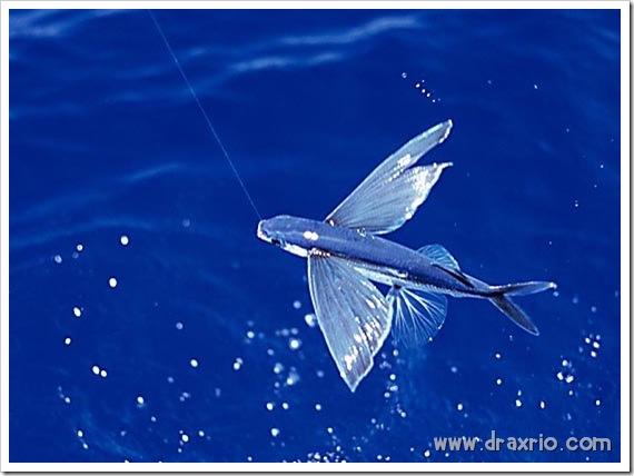 1244620225_fish_08_thumb6