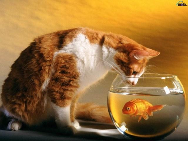 gatos_y_pez