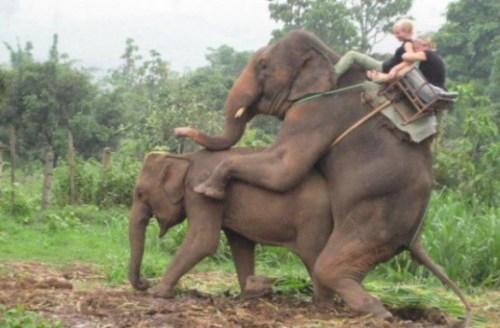 elephantsp-585x384