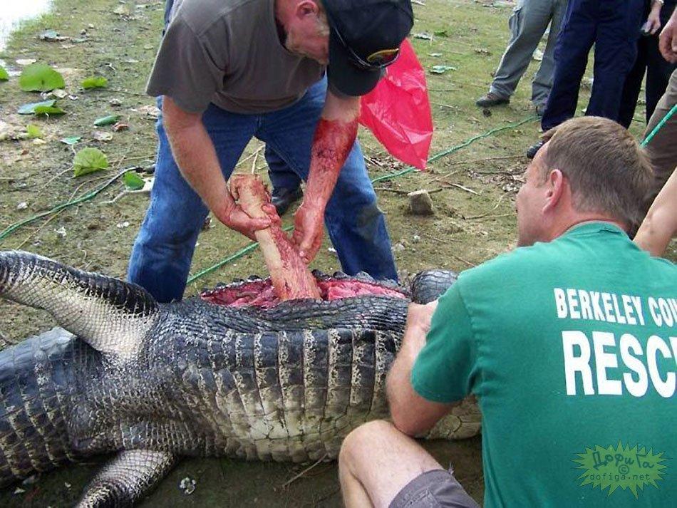 Gator Guys Arm Eating
