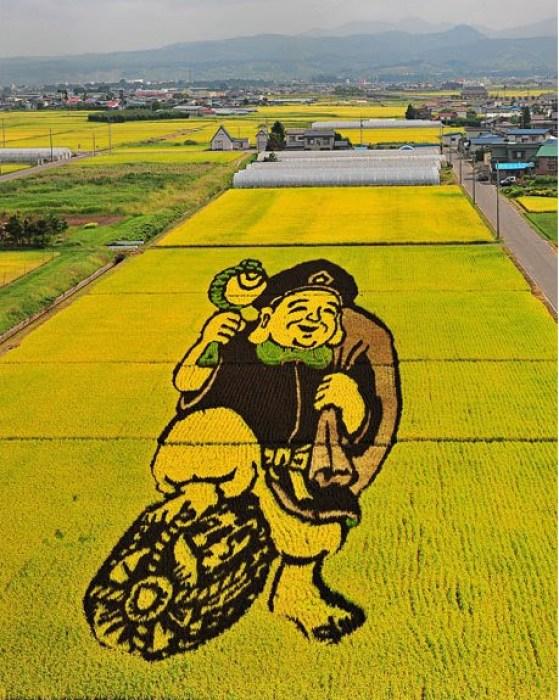 plantações de arroz no Japão 01