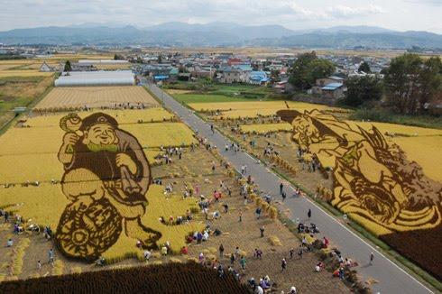 plantações de arroz no Japão 03