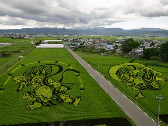 plantações de arroz no Japão 05