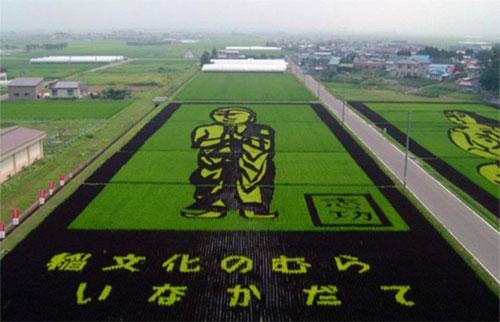 plantações de arroz no Japão 12