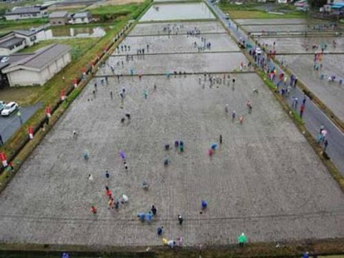plantações de arroz no Japão 14