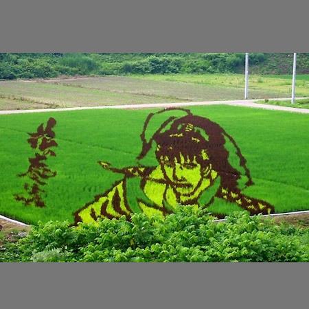 plantações de arroz no Japão 23