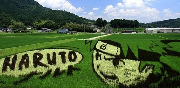 plantações de arroz no Japão 25
