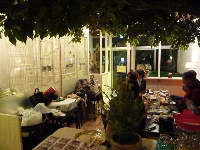 cafes_coruja_japao_12