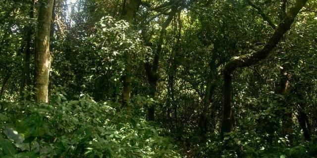 Ilha-de-Queimada-Grande-03