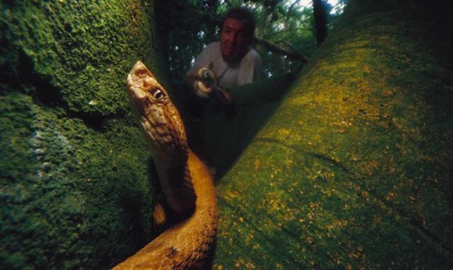 Ilha-de-Queimada-Grande-09