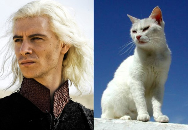 game-of-cats-16