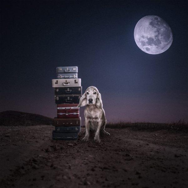 cachorros-ensaio-abrigo-8