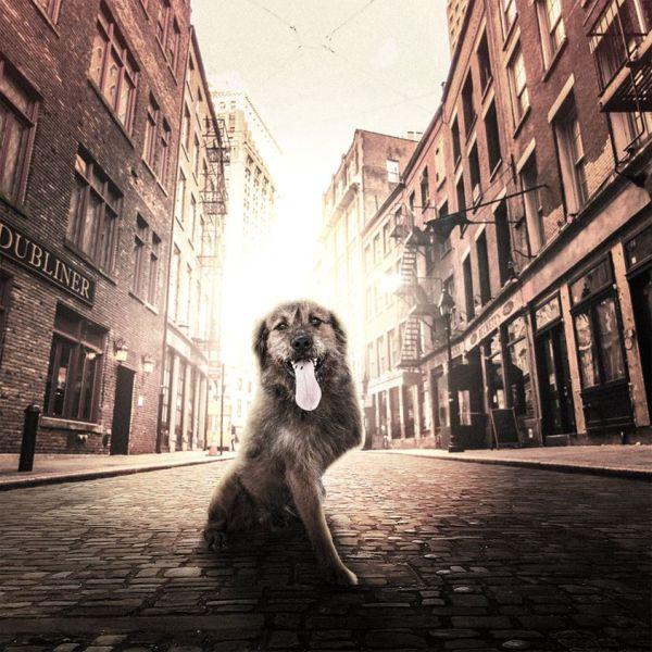 cachorros-ensaio-abrigo-9