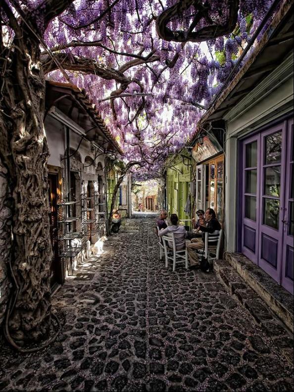 ruas-cobertas-flores-arvores-1